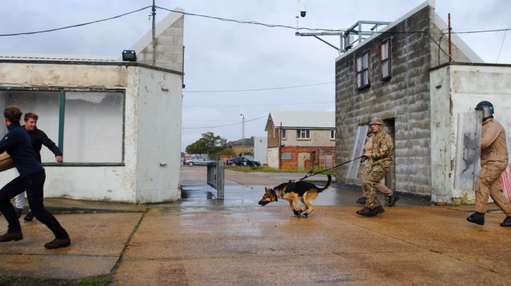 Dog Day for Bermuda Soldiers